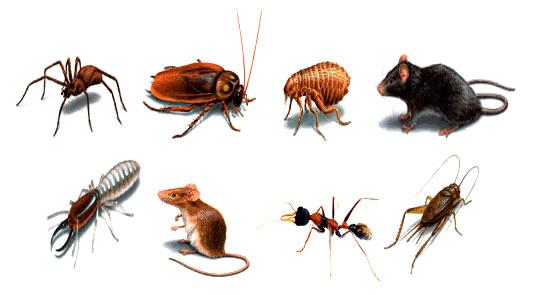 Tìm cách diệt côn trùng hiệu quả và tiết kiệm nhất