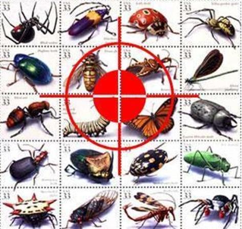Dịch vụ diệt côn trùng ở Vĩnh Long
