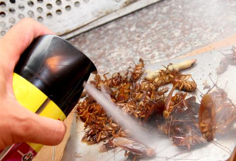 Cần bảo quản thuốc diệt côn trùng để tránh hiểm hoạ