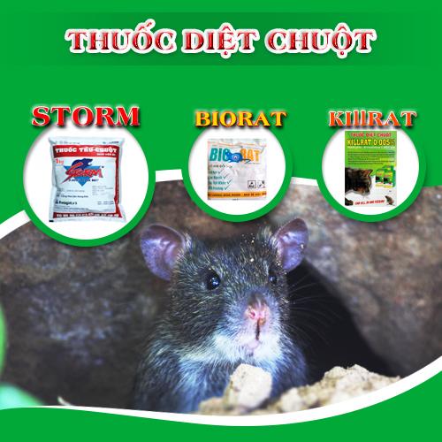 Cách dùng bẫy đuổi chuột hiệu quả